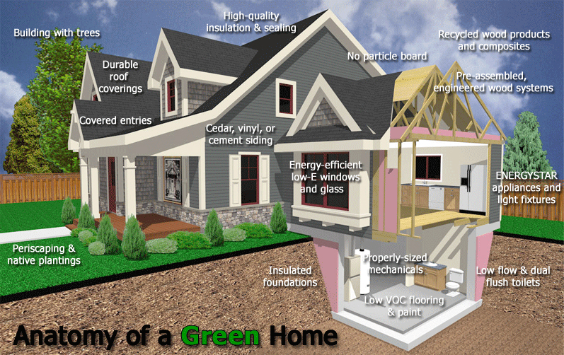 green home anatomy